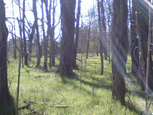 Claymont North Woods